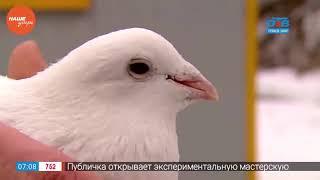 Не берите голубей