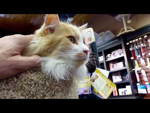 ORANGE BLOSSOMS 2nd Video🐱🐾Pet Valu 76 Ave Strathcona 🇨🇦Edmonton , Alberta