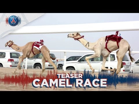CAMEL RACE : AN AMAZING EVENT COMING SOON
