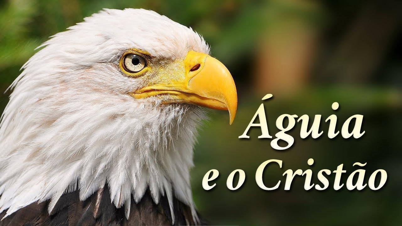 A águia E O Cristão O Vídeo Mais Lindo E Emocionante Que