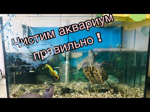 Как менять аквариум черепахам