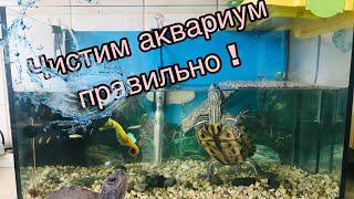Красноухая черепаха. Как правильно чистить аквариум и меня воду для черепахи