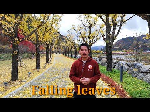 ລະດູໃບໄມ້ປ່ຽນສີ---beauty-of-autumn-season