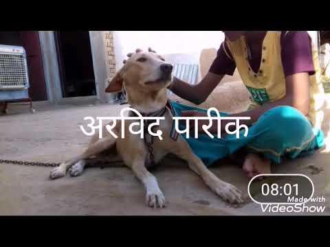 DSP Pareek Channal Ki Niw Vidio Arvind Pareek 9413552554