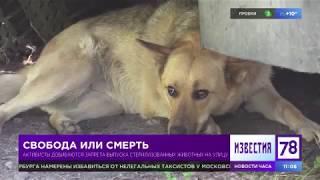 В Петербурге судят собак