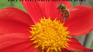 The Neonicotinoid View  PSC Efforts To Protect Bees And EAS Review