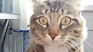 Два кота одни дома.Кот Гришка и Барсик.Смешные коты и кошки