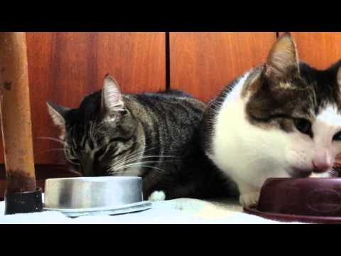 Why Cats Stop Eating Dry Food