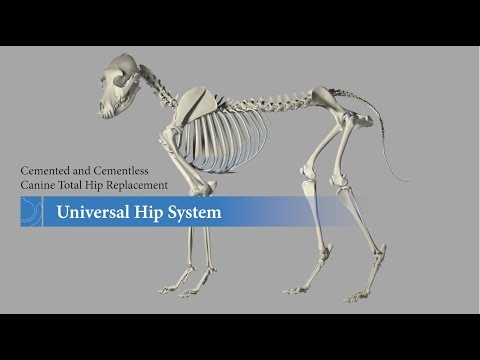 Canine Total Hip Replacement Animation