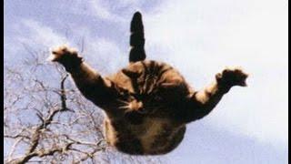 Кот упал с 5 этажа  Падение кота с высоты