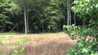 30 acres of Land For Sale in Gates County, NC: Maverick 2 Stand