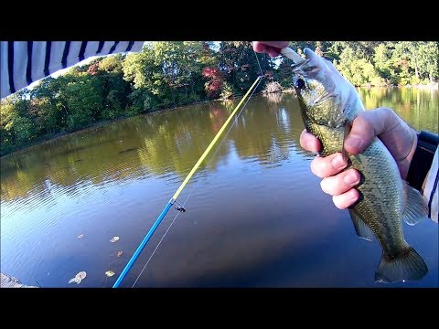 Largemouth Bass and Catfish Of Van Cortlandt Park Bronx New York