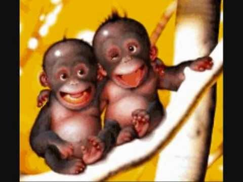 Bien-aimé ☻ animaux rigolo ☻ - YouTube FO04