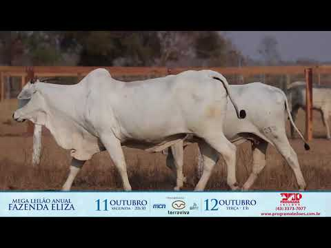 LOTE 192