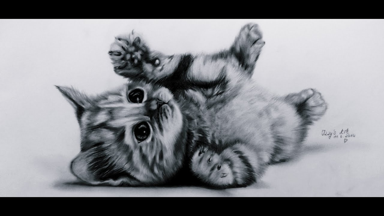 Uncategorized Drawing Of Kitten lets draw cute kitten baby cat youtube