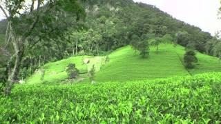Черный чай из Шри-ланки(, 2014-10-15T12:37:35.000Z)