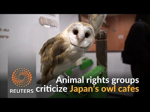 Japan's cafe owls are at risk, warn animal rights groups ...