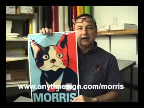 Morris The Cat Mexican candidate will get the rats out of politics