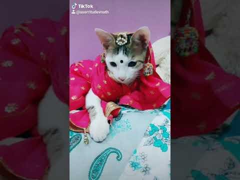 Download kajal cat 🐈comedy video   #lala