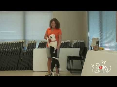Basic Manners Training (Dogs) - The SPCA of Wake County