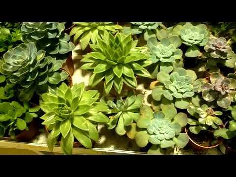Флорариум или сад в бутылке. Сколько стоит сделать своими руками по ценам в АШАНЕ.
