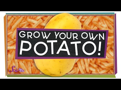 Grow Your Own Potatoes!