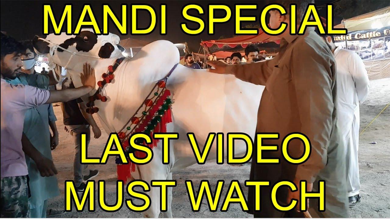 Islamabad Cow Mandi 2020 | Last Video of VIP Fateh Jangi Bulls | End of Mandi Season 2020