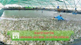 Bí quyết nuôi tôm lớn nhanh, sạch bệnh, lãi 200 triệu đồng/vụ | VTC16