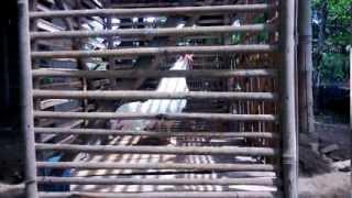 ayam bekisar putih