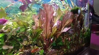 Аквариум 400 литров с живыми растениями и рыбками
