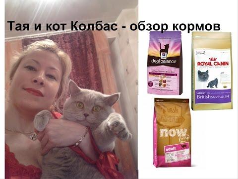 Обзор кормов для кошек NOW Natural holistic, Royal Canin, Hills Ideal Balance