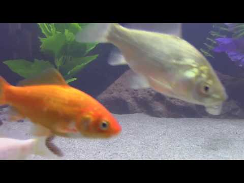 How To Clean And Use Beach Sand For Your Aquarium