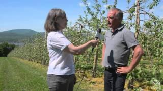 Des pommiers nains et semi-nains dans les vergers du Québec