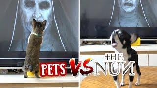 the-nun-pets-reaction