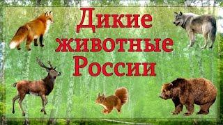 Дикие животные России 🐻 Изучаем диких животных и их голоса. Развивающее видео для детей