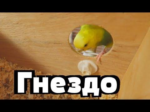 Вопрос: Во сколько месяцев волнистые попугаи начинают откладывать яйца?