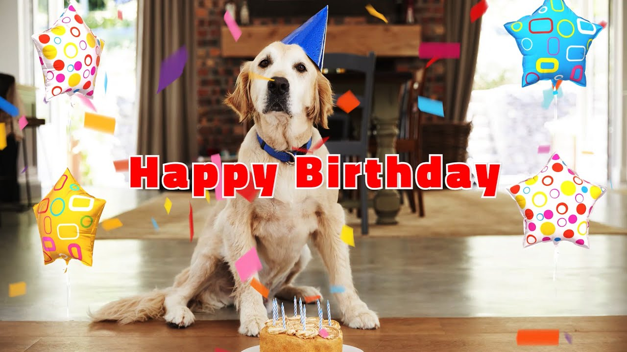 Happy Birthday Song Happy Birthday To You Cute Birthday Dogs Cats Youtube