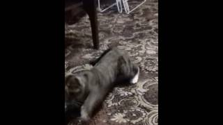 кошка дышит как собака.ржач)))))