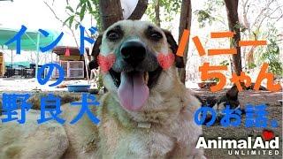 皆さんこんにちは! いくつかに分けてお送りする予定でいる「Animal Aid...