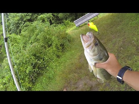 How to Fish a Squarebill Crankbait for Bass by 1Rod1ReelFishing