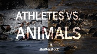 Athletes Vs. Animals: Athletic Similarities in the Animal Kingdom and the Olympic Games