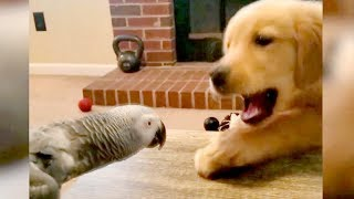 Download So FUNNY you'll DIE LAUGHING! - Best FUNNY ANIMALS 2019 Mp3 and Videos