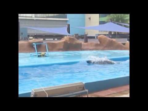 Manila Ocean Park Documentary Film
