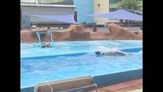 Manila Ocean Park Documentary Film