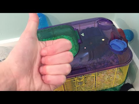 CLEANING OUT DWARF HAMSTER'S CAGE