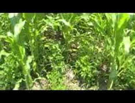 Survival Gardening Part 1 peak oil, food storage, prepper ...