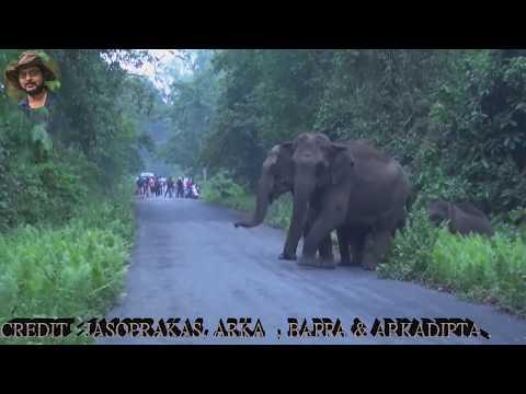 Feel The Beauty Of Wilderness With Jasoprakas 49.