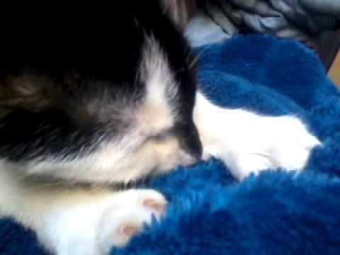 Katze sabbert beim schnurren