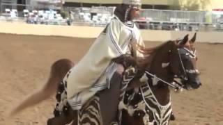 Арабские лошади очень грациозны