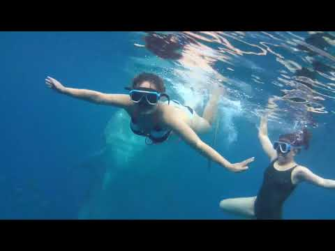 Oslob, Cebu City (Swimming with the Gentle Giants)